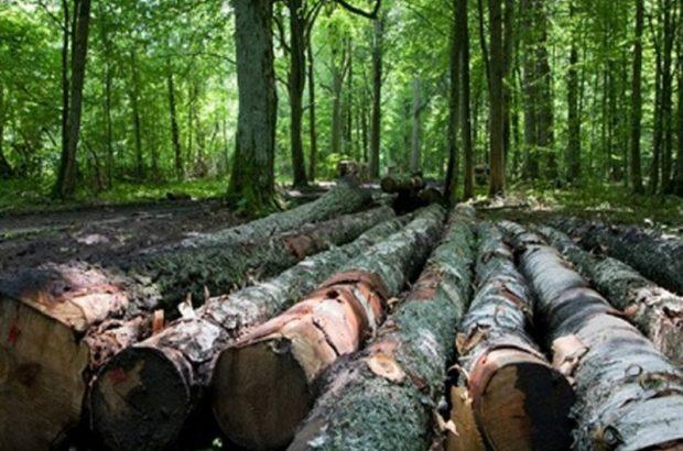 قطع درخت در کلیبر تا ۸ ماه ممنوع شد