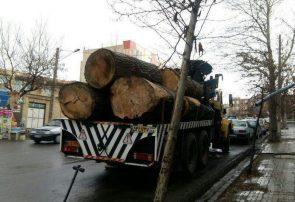 حمل چوب به مقاصد نامعلوم در مسیر عادى سازى