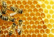 آذربایجان شرقی دومین تولیدکننده عسل در کشور است