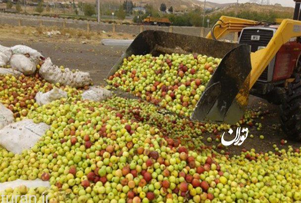 قطب تولید سیب کشور دست به گریبان با دلالان